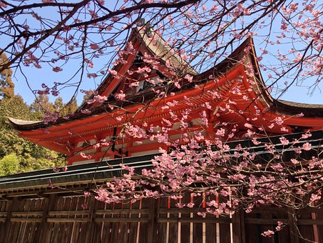 Cherry Blossoms, Spring, Spring In Japan, Cherry Tree