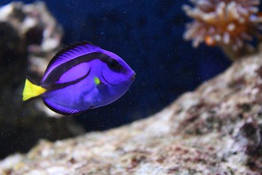 Fish, Aquarium, Water, Dori