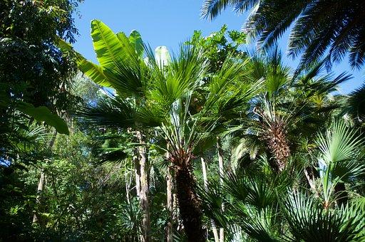 Palm, Banana, Exotic Garden, Isle Of Batz