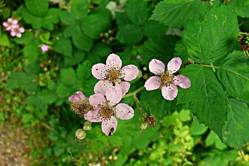 Flower, Plant, Bloom, Pistil, Petal, Leaf, Garden