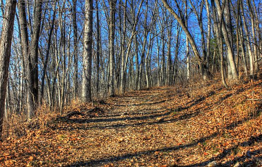Babbler State Park, Usa, Missouri, Path, Tree, Organic