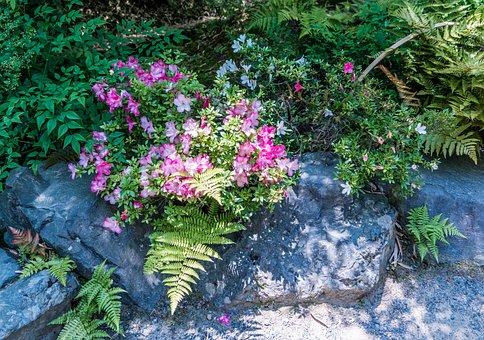 Flowers, Rock, Ferns, Plant, Nature, Landscape, Green