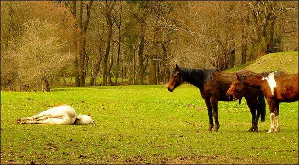 Horse, Horses, Animal, Animals, Ride, Nature, Mane