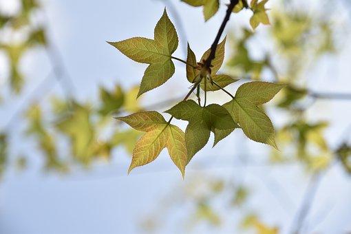 Autumn, Building, Photography Hobby, Plant, Flower