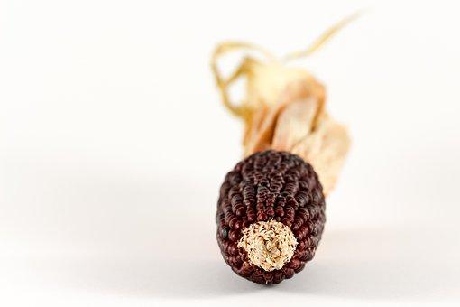 Corn, Ornamental Corn, Cereals, Plant, Corn Cultivation