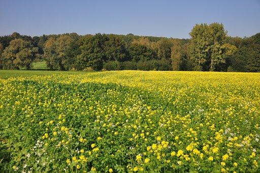Flemish Ardennes, Flanders, Belgium, West-flanders