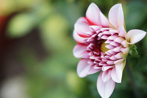 Nature, Gardening, Flower, Microphotographing