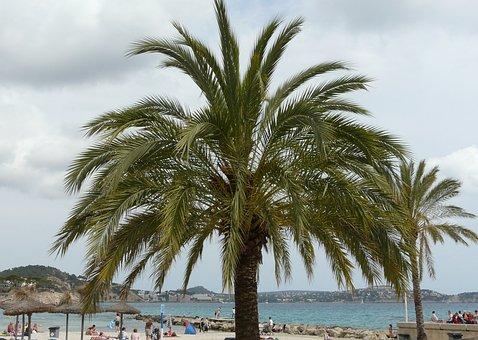 Mallorca, Paguera, Palm, Beach, Sea