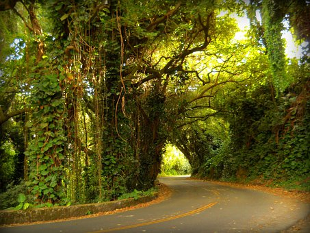 Pali, Road, Curve, Nuuanu, Rainforest, Hawaii, Nature