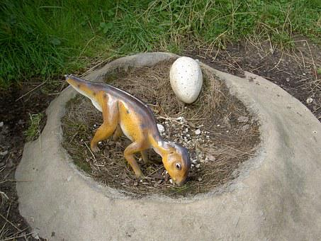 Dinosaur Nest, Egg, Earth, Grass, Park