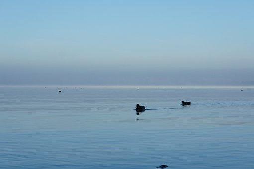 Ducks, Chiemsee, Mood, Water, Rest, Silent, Idyll