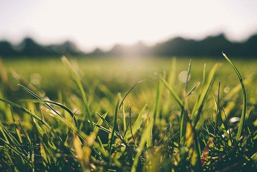 Grass, Morning, Dew, Nature, Green, Summer, Spring