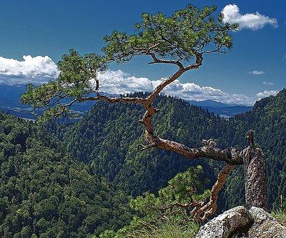 Tree, Nature, Stock Photo Of The Tree