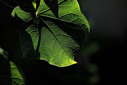 Shadow, Green, Exit, Tecture, Light, Nature