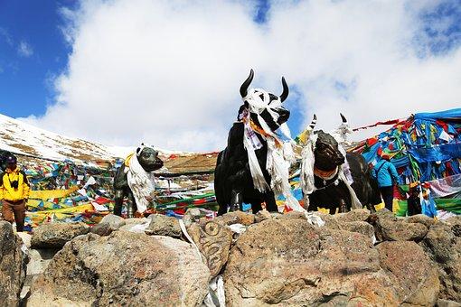 Tibet, Mila Mountains, Yakou, Copper And Yak, Blue Sky