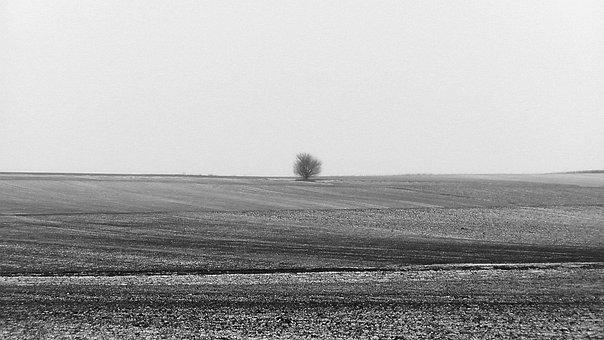 Loneliness, Lonely, Tree, Winterlandschft, Mood