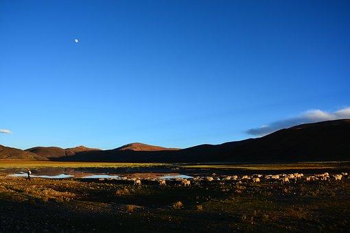 Tibet, Herd Returns, At Dusk
