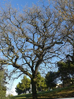 Tree, Branches, Nature, Trees, Plant, Bare