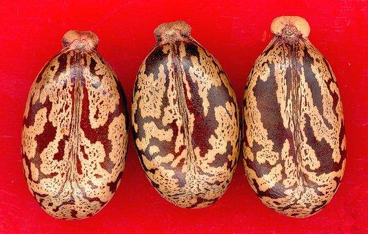 Seeds, Castor Oil Plant, Plant, Medicinal Plant, Nature