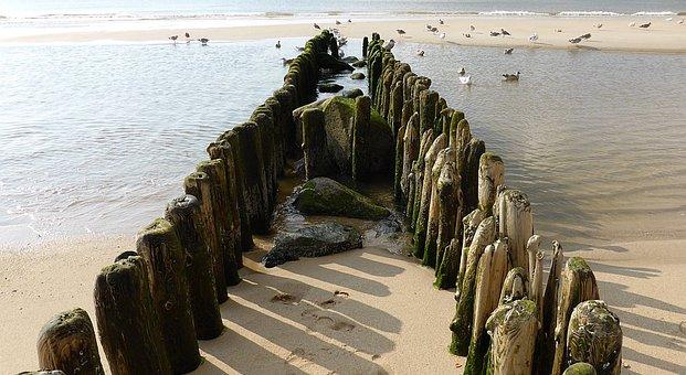 North Sea, Beach, Groynes, Gulls, Coastal Protection