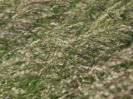Grass, Flowers, Grasses, Meadow, Wind, Summer