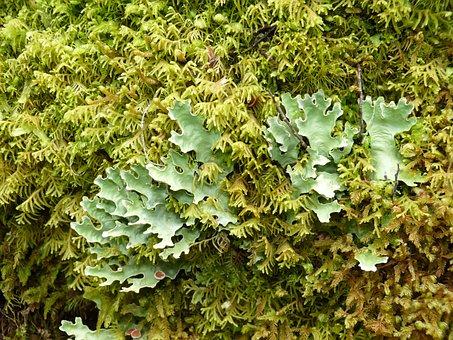 Rainforest, Green, Plant, Forest, Leaf, Nature