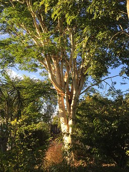 Leopard Tree, Nature, Wilderness