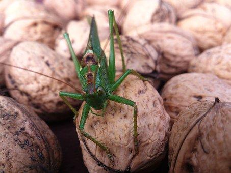 Locusts, Summer, Orzerch