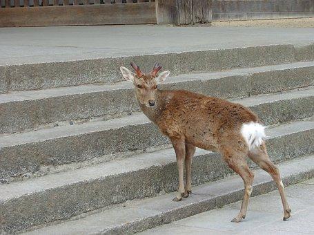 Nara, Deer, In Return