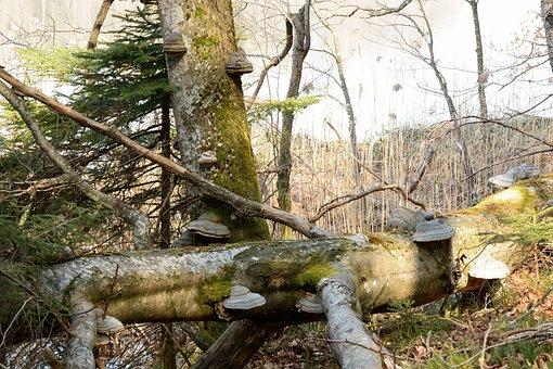 Tree Fungus, Mushroom, Tree, Mushrooms On Tree, Nature