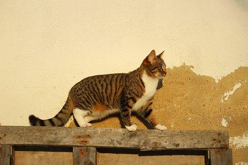 Cat, Wall, Plaster, Mackerel, Mieze, Domestic Cat