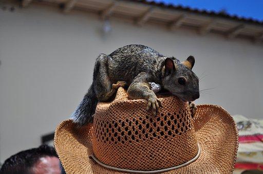 Squirrel, Man With Squirrel, Honduras, Valley Of Angels