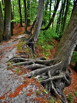 The Roots Of The, Forest, Tree, The Path, The Coast