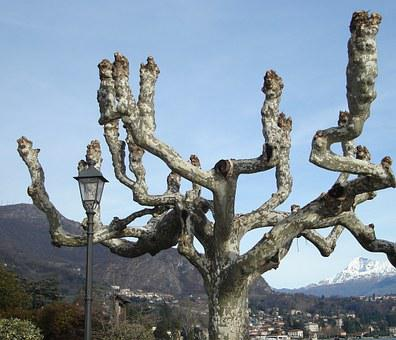 Tree, Branches, Twisted Branches, Arms, Nature, Branch