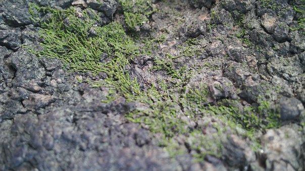 Wood, Bark, Mountain, Tree, Cracks, Tree Bark Texture