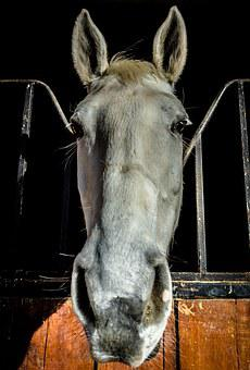 Horse, Block, Animal, Tame, Good, Docile, White, Rump