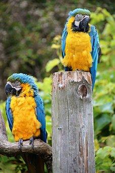 Parrot, Macaw, Tropical, Bird, Nature, Animal, Wild