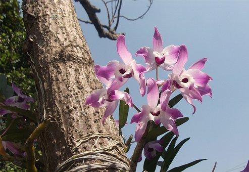 Flowers, Orchids, Garden, Brazil, Suzano, Amazon