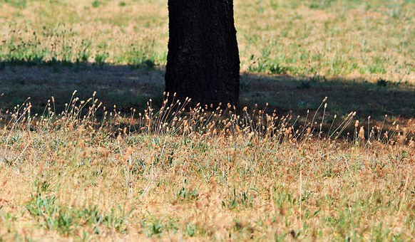 Grass Tufts, Tree, Trunk, Grass, Short, Dry, Tufts