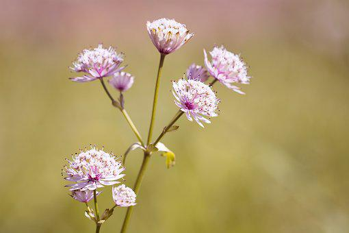 Flower, Pointed Flower, Grassland Plants, Flowers