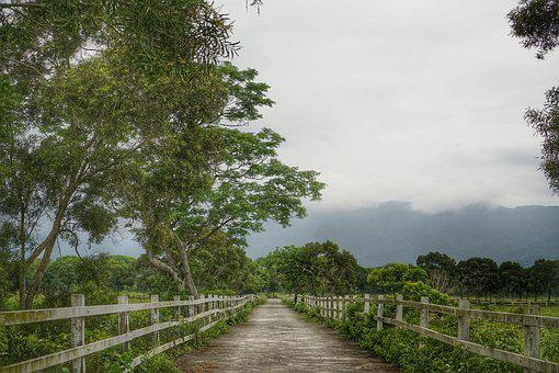 Taitung, Looks Can't 盡, Green Oil