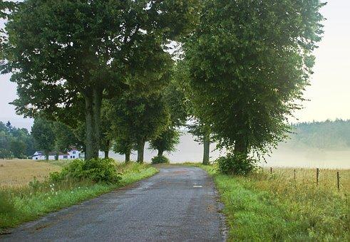 Way, The Fog, Morning, Masuria, Poland, Zawady Ełckie