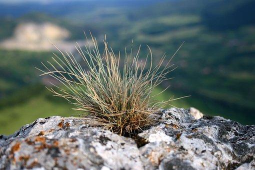 Grass Tuft, Grass, Stone, Mountain, Nature, Tuft, Green