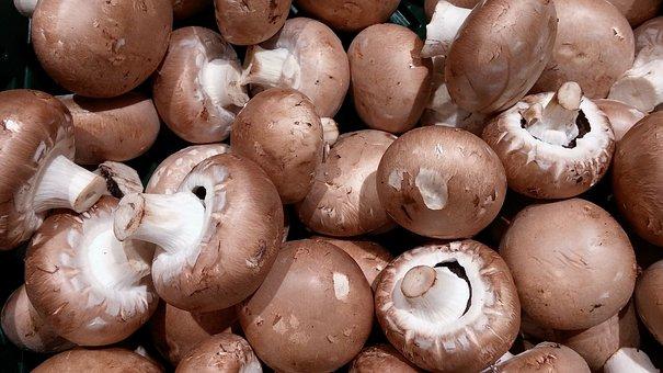 Mushrooms, Mushroom, Root Champignon, White Mushroom