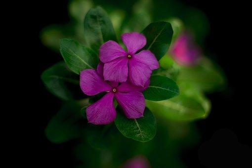 Nature, Flower, Best, Ever Green, India, Mumbai, New