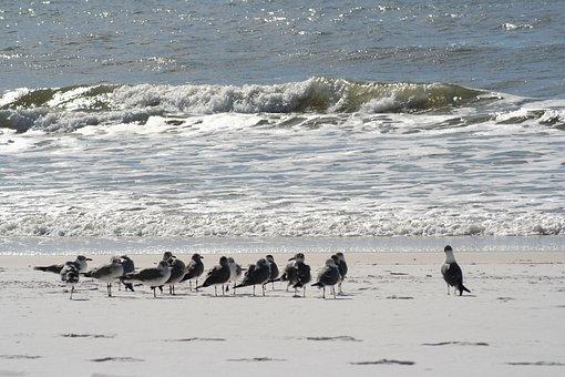 Beach, Sand, Gulf, Gull, Seagull, Ocean, Sea, Water