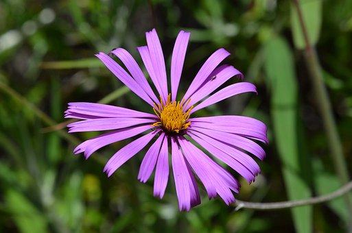 Asteraceae, Montane Forest, Peruvian Biodiversity