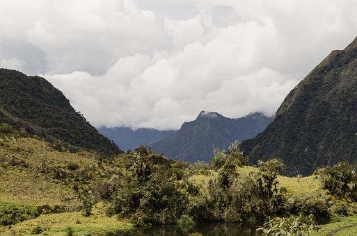 Montane Forest, Peruvian Biodiversity