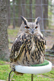 Bird, Predator, Sitting, Feather, Beak, Forest, Wild