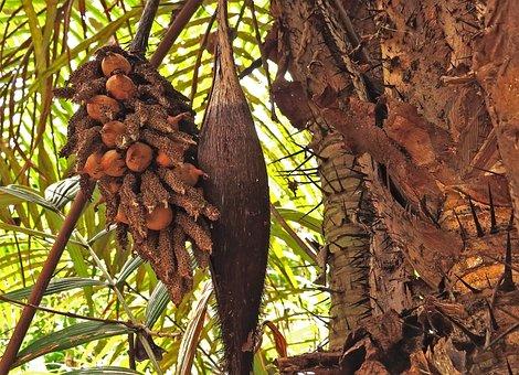 Exotic, Thorns, Brazil, Amazon, Rain Forest, Tropics